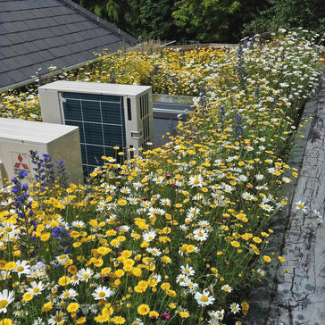 Lindum Wildflower Green Roof Package