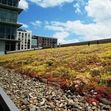 Lindum Sedum Green Roof Package