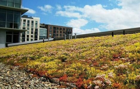 11 Reasons Why You Need To Install A Green Roof